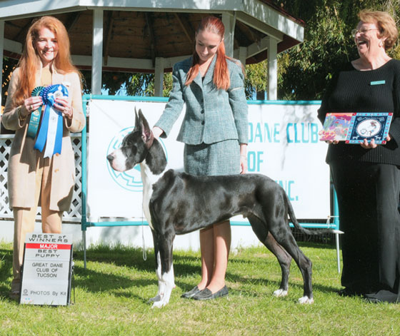 WD/BOW/Best Puppy at the GDC of Tucson Specialty!!