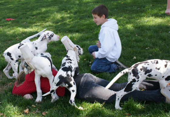 puppies_kids_3