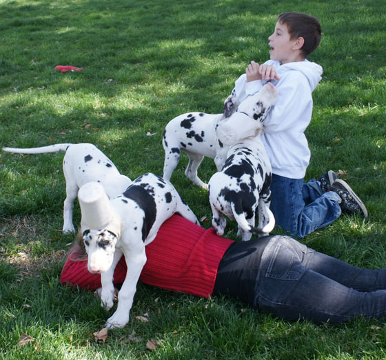 puppies_kids_4