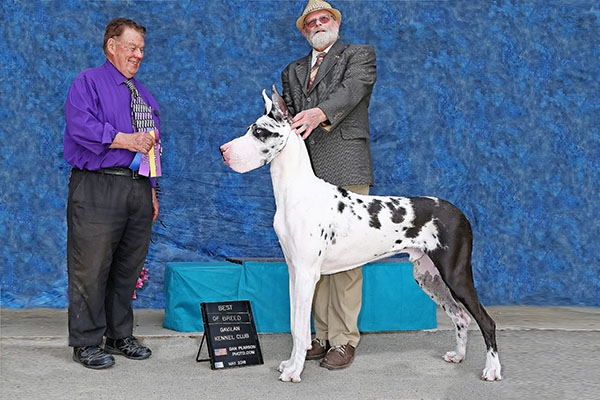 Gavilan Kennel Club Saturday web